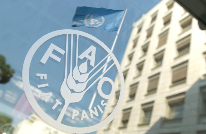 FAO Buildings
