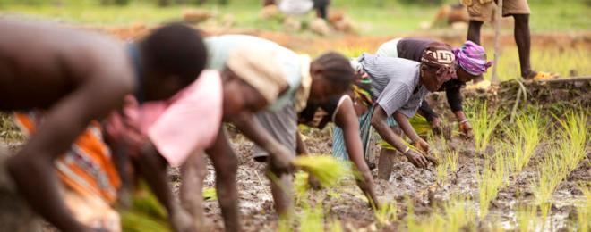 Liberian Agriculture-USAID-Courtesy USIP
