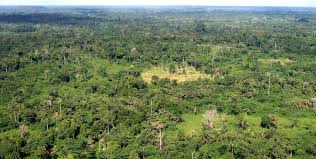 Aerial Forest View in Liberia