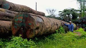 Logging in Liberia - File photo courtesy of PBS